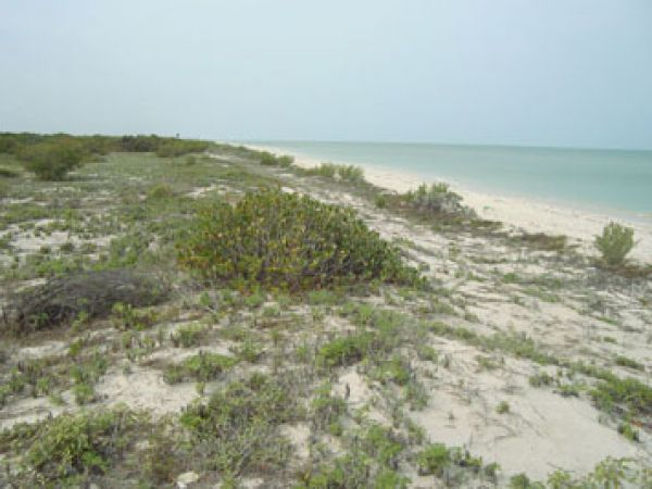 Lot beachfront for sale at Celestun with own dune